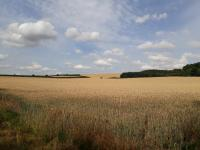 Picture of Walk at Wintringham to Ganton
